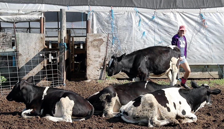 jordan-heifers-outtake